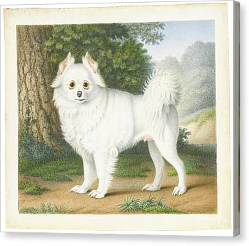 A Pomeranian In A Landscape Canvas Print by MotionAge Designs