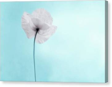 A Poppy Against A Cool Blue Background Canvas Print by Alexandre Fundone