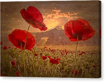 Ga Canvas Print - A Poppy Kind Of Morning by Debra and Dave Vanderlaan