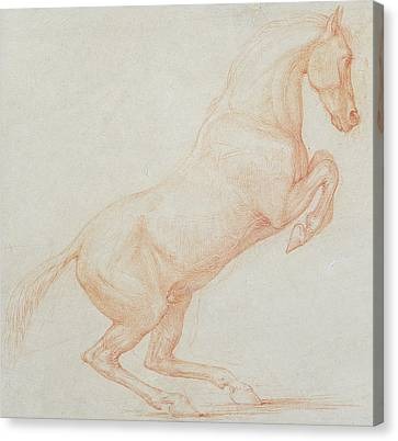 A Prancing Horse Canvas Print by George Stubbs