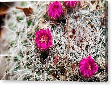 A Prickly Bed Canvas Print by Christopher Holmes