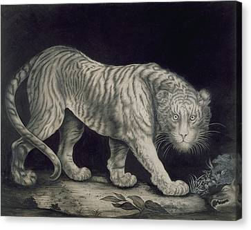 A Prowling Tiger Canvas Print by Elizabeth Pringle