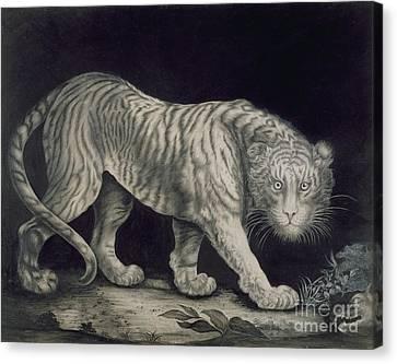 A Prowling Tiger Canvas Print by Elizabeth Pringle