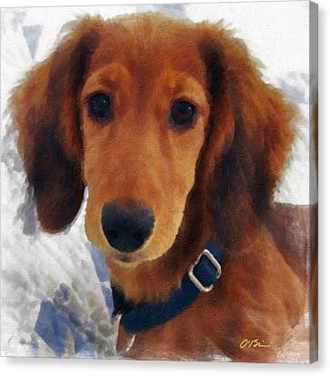 A Puppy Called Redford Canvas Print by Claudia O'Brien
