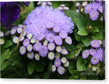 Canvas Print featuring the photograph A Purple Morning by Edward R Wisell
