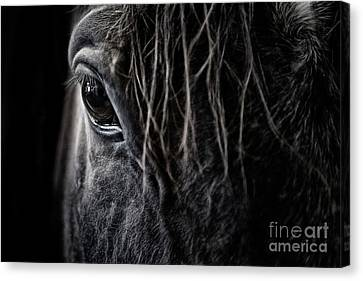 A Race Horse Named Tikki Canvas Print