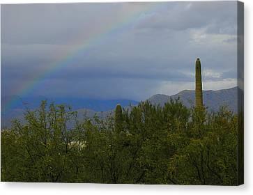 Rain Barrel Canvas Print - A Rainbow In The Desert by Teresa Stallings