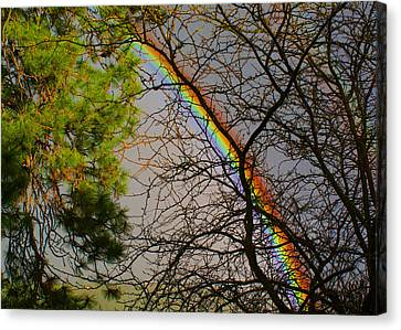 A Rainbow Tree Canvas Print by Ben Upham III