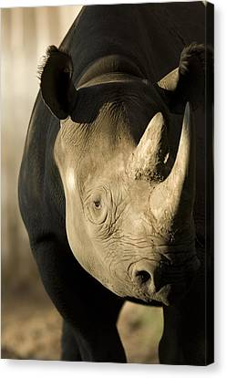 A Rhinoceros At The Sedgwick County Zoo Canvas Print