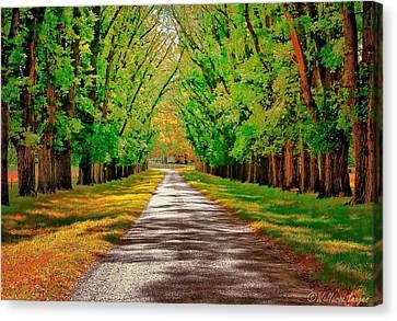 A Road Through Autumn Canvas Print