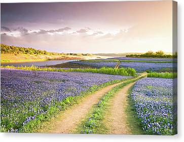A Road To Bluebonnet Heaven Canvas Print by Ellie Teramoto