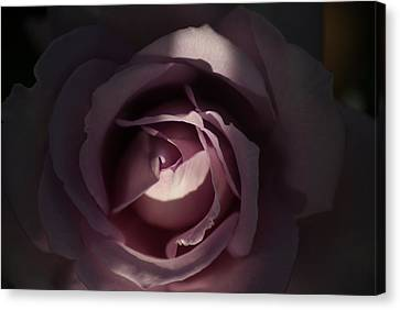 A Rose By Any Name Canvas Print by Ron Read