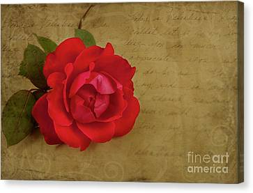A Rose By Any Other Name Canvas Print by Lena Auxier