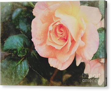 A Rose For Kathleen Canvas Print by Janice Rae Pariza