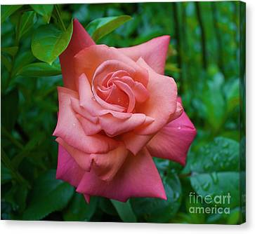 A Rose In Spring Canvas Print