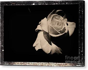 Masters Winners Canvas Print - A Rose Is But A Rose  by Scott D Van Osdol