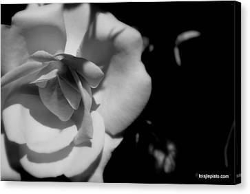 A Rose Canvas Print by Lois Lepisto