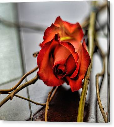 Canvas Print featuring the photograph A Rose On Bamboo by Diana Mary Sharpton