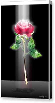 A Rose Canvas Print by William R Clegg