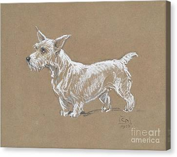 A Sealyham Terrier Canvas Print by MotionAge Designs