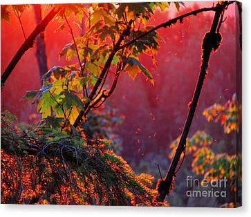 A Season's  Sunset Dusting Canvas Print