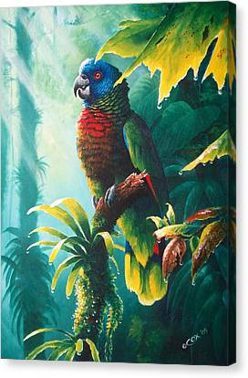 A Shady Spot - St. Lucia Parrot Canvas Print by Christopher Cox