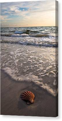 A Shell's Life Canvas Print by Clay Townsend