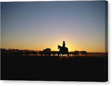 A Silhouetted Australian Cattle Rancher Canvas Print by Medford Taylor