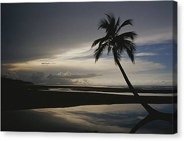 A Silhouetted Palm Tree On A Twilit Canvas Print by Raul Touzon