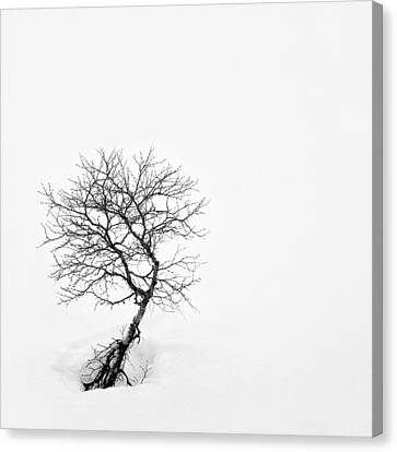 A Simple Tree Canvas Print by Dave Bowman