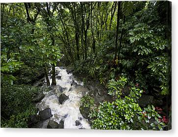 El Yunque Canvas Print - A Small River Flows Through A Dense by Hannele Lahti