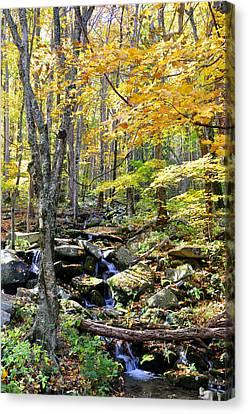 A Smokey Mountain Stream  Canvas Print