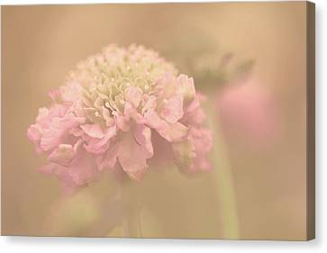 A Soft Touch  Canvas Print by Connie Handscomb