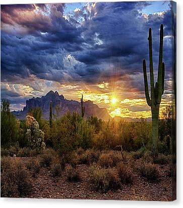 A Sonoran Desert Sunrise - Square Canvas Print