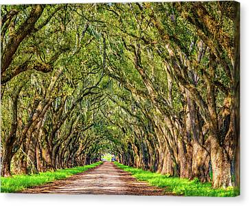 Evergreen Plantation Canvas Print - A Southern Lane 2 by Steve Harrington