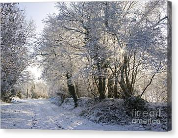 A Sparkling Winter Day Canvas Print by Sophie De Roumanie