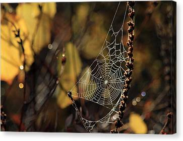 A Spiders Creation Canvas Print by Karol Livote