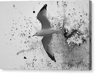 A Splash Of Gull Bird Art Canvas Print