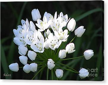Canvas Print featuring the photograph A Spray Of Wild Onions by Felipe Adan Lerma