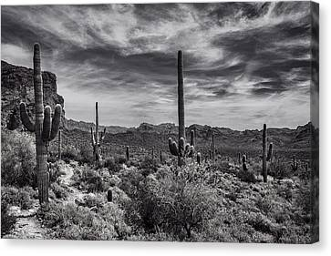 Canvas Print featuring the photograph A Morning Hike In The Superstition In Black And White  by Saija Lehtonen