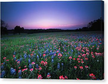 A Spring Night's Wildflower Dream - Texas Canvas Print by Ellie Teramoto