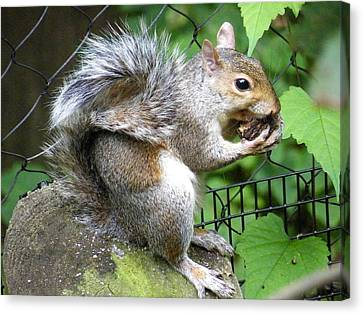 A Squirrelly Portrait Canvas Print