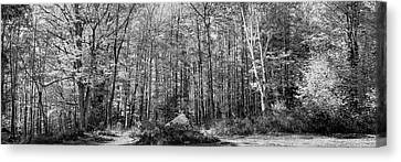 A Stand Of Trees Canvas Print by David Patterson