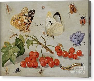 Nature Study Canvas Print - A Still Life With Sprig Of Redcurrants, Butterflies, Beetles, Caterpillar And Insects by Jan Van Kessel