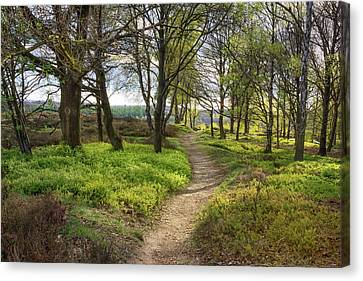 A Stroll In Springtime On De Posbank In The Netherlands Canvas Print by Tim Abeln