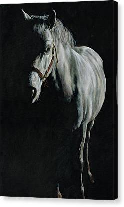 A Study Of A Pony In The Shadows Canvas Print by Richard Mountford