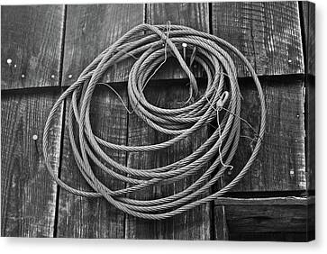 A Study Of Wire In Gray Canvas Print by Douglas Barnett