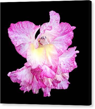 A Succulent Gladiola Canvas Print