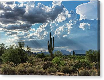 Canvas Print featuring the photograph A Summer Day In The Sonoran  by Saija Lehtonen