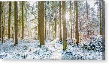 Canvas Print featuring the photograph A Sunny Day In The Winter Forest by Hannes Cmarits